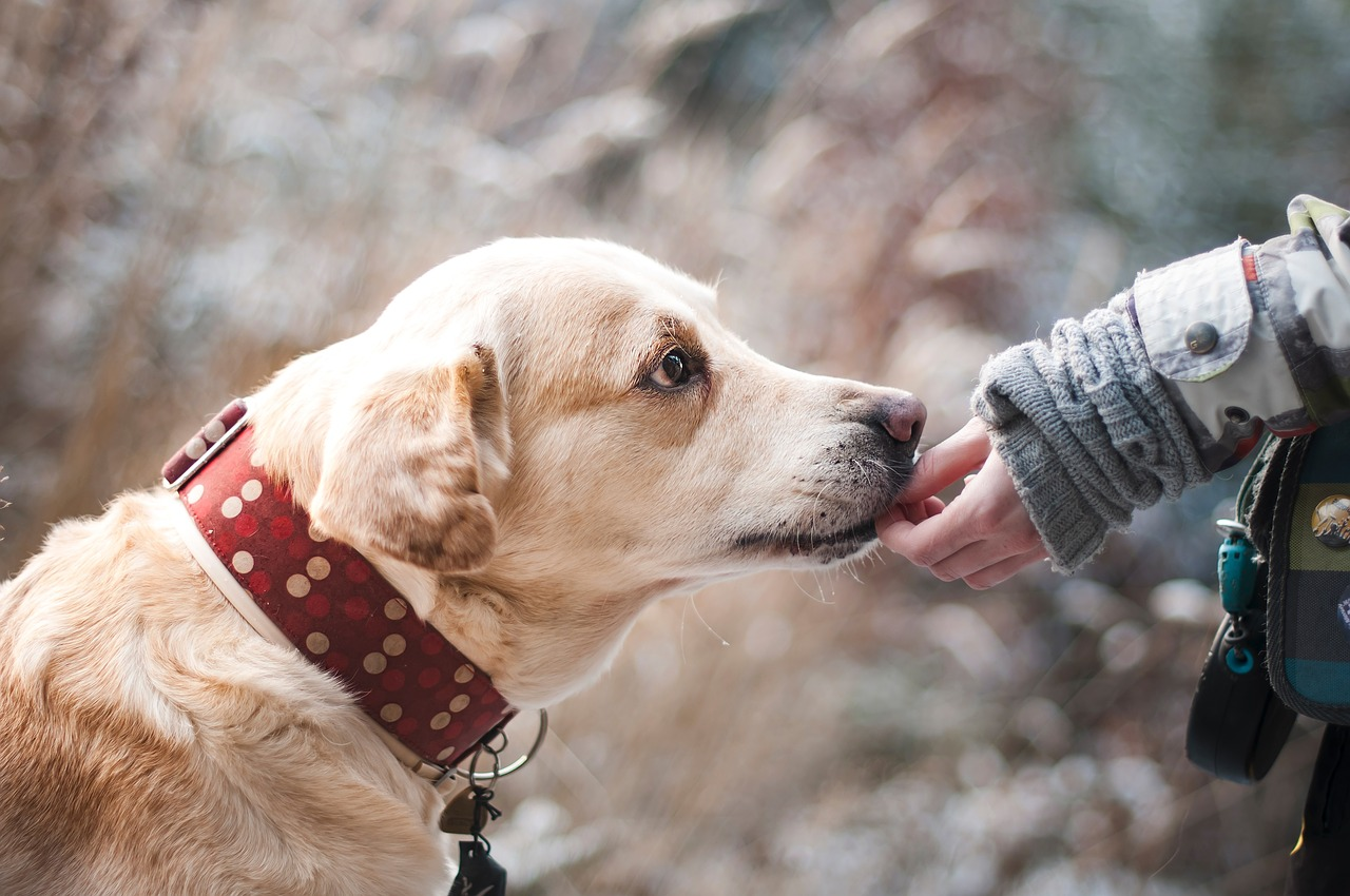 10 Benefits of Adopting a Rescue Dog