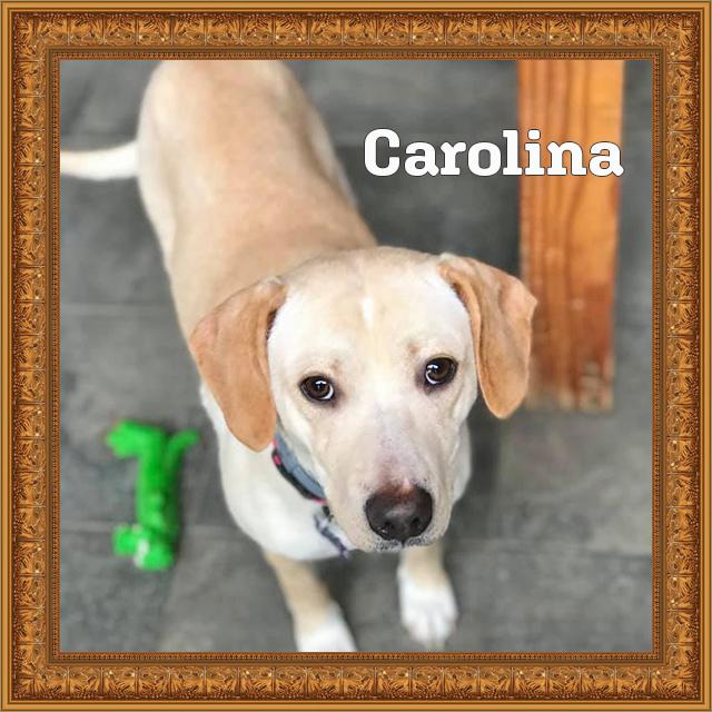 Carolina - HOH Adoptables