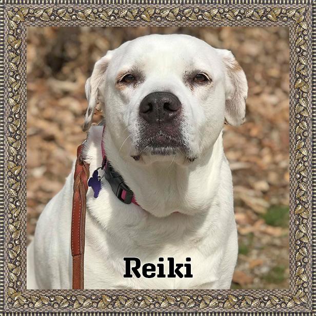 Reiki | HOH Adoptables
