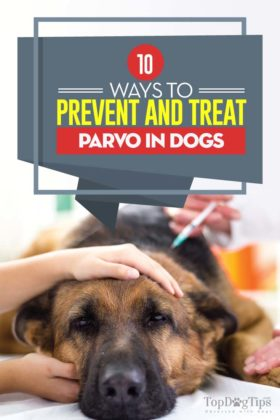 Ways to prevent and treat parvo in dogs