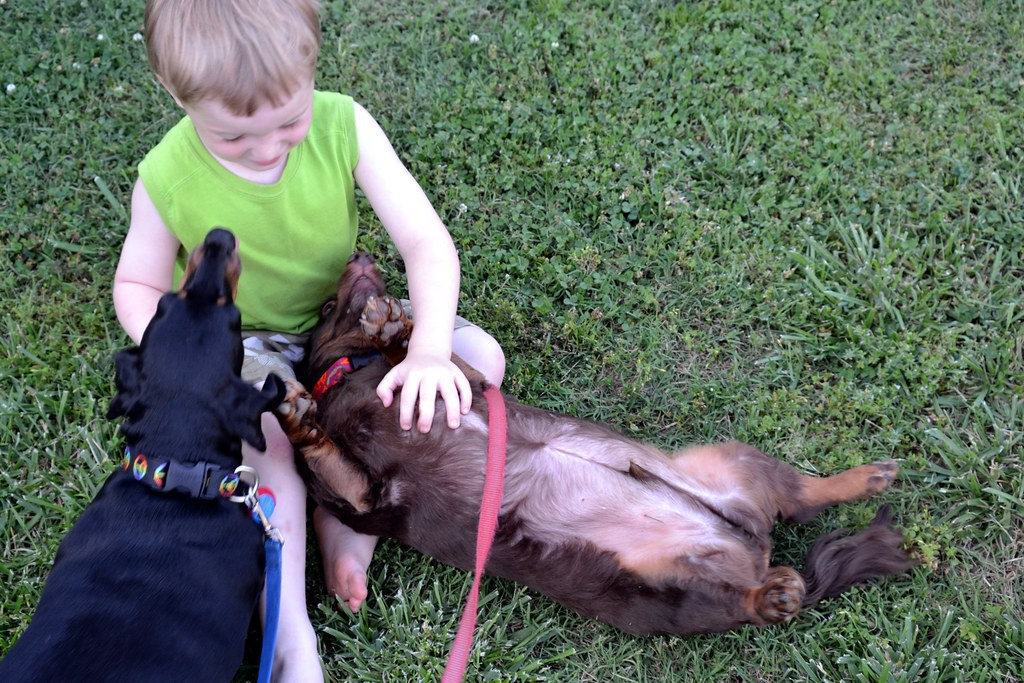 How Kids Should and Should Not Interact with Dogs
