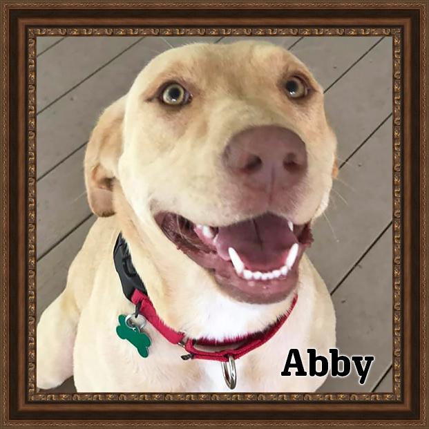 Abby - Adoptable Dog