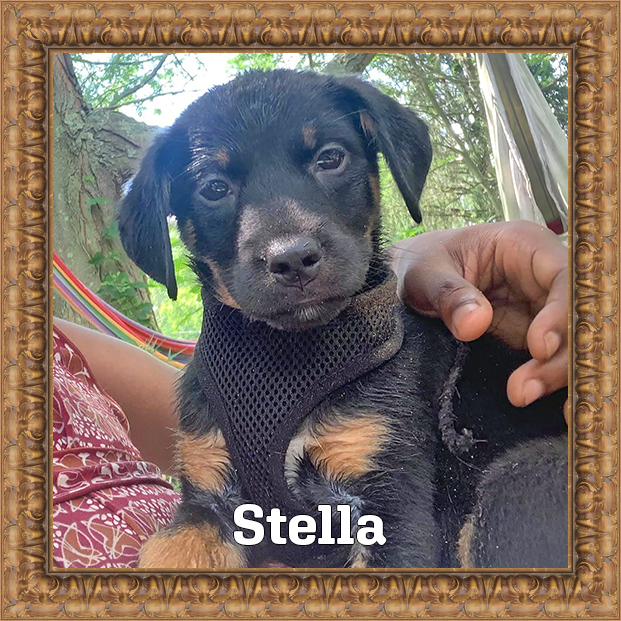 Stella - HOH Adoptable Dog