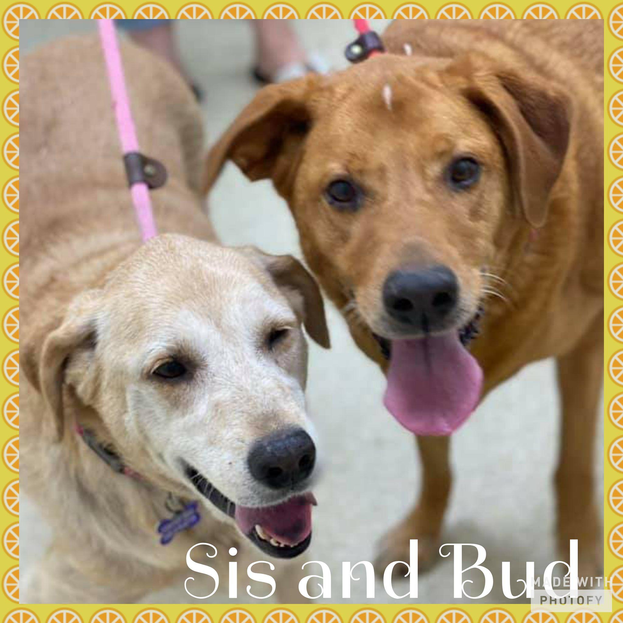 Bud and Sis